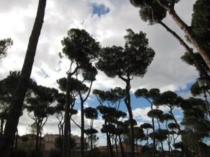 Villa Borghese Gardens pine trees