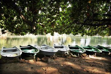 Villa Borghese Gardens boats under tree