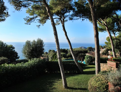 Monte Argentario pine tree views