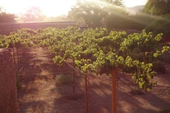 Tierra Atacama vineyard