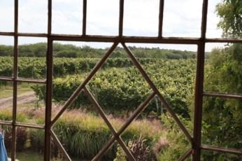 Narbona Wine Lodge window view