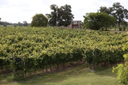 Narbona Wine Lodge vineyard