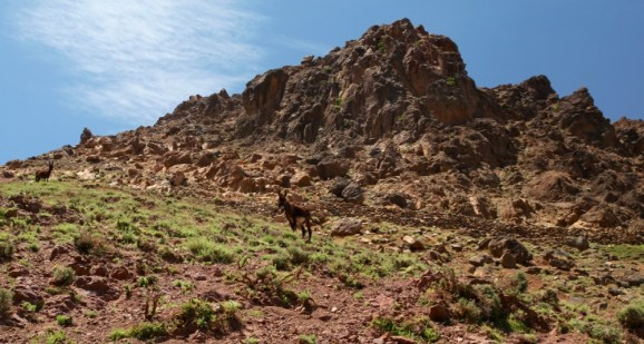 Hiking in the High Atlas donkey mountain