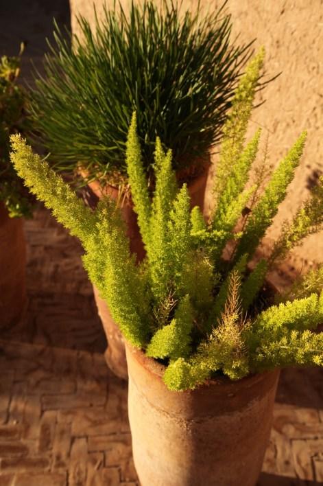 Dar Ahlam plants