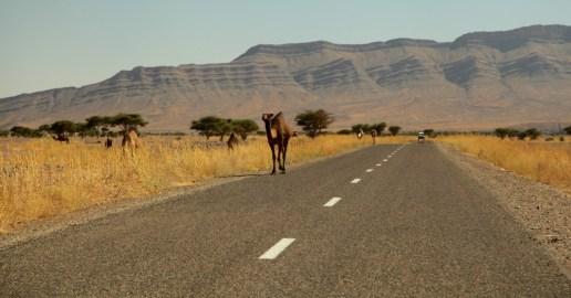 Morocco donkey desert