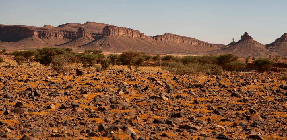MOROCCO--INTO THE SAHARA desert scrub