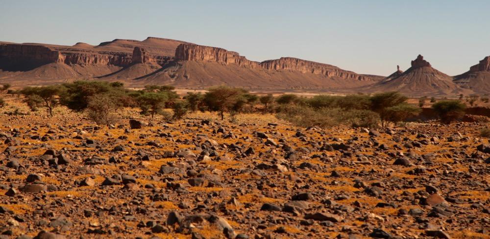 MOROCCO--INTO THE SAHARA desert scrub