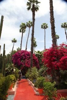 Jardin Majorelle palms