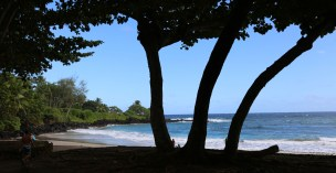 Hamoa Beach trees