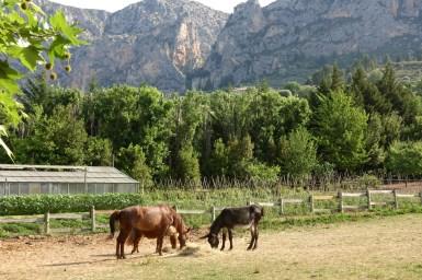 Bastide de Moustiers horses