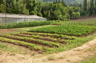 Bastide de Moustiers vegetable gardens