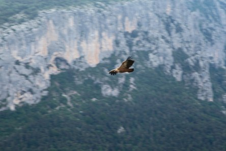 Gorge du Verdon vulture canyon