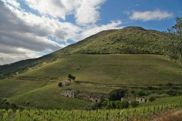 Douro Valley green hillside