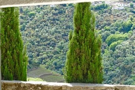 Quinta do Panascal trees