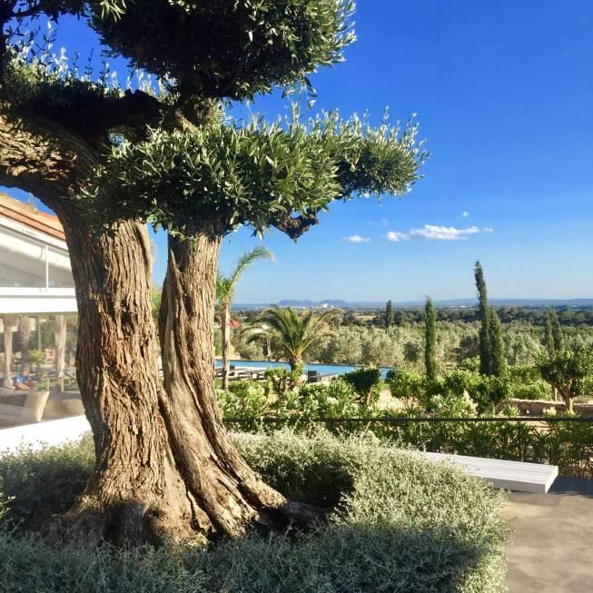 Hotel Mas Lazuli tree