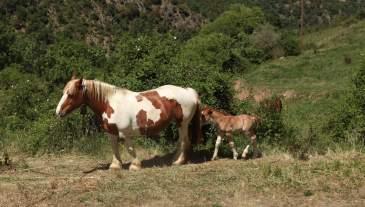 Arsèguel horses