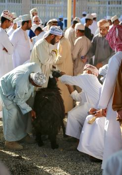 I tried my best to stay back, a tourist myself, shooting over the bouquet of Omani caps. A few times I was jostled and nudged; annoyed, I turned around and realized it was just a goat at my feet, trying to enter the ring. This is Oman, I forget that nobody is ever rude or cross. People don't even honk!