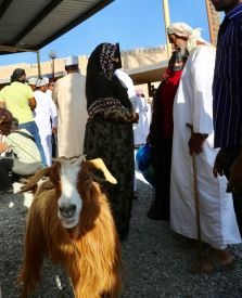 Nizwa Goat Market negotiations
