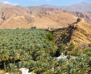 Nizwa date palm valley