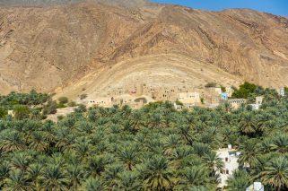 Dates for days. Near Nizwa, Oman.
