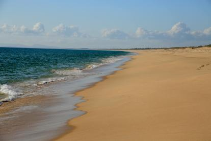 You always hear about how crowded Portugal beaches are, but those are mainly in the Algarve, or outside Lisbon. Most of Comporta looks like this. Endless miles of uncrowded beaches, often hard to tell pictures from one to the next because it is all so pristine.