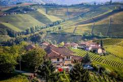Ginestra Barolo view of wine production