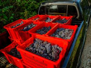We took four or five truckloads to weigh and to the cellar