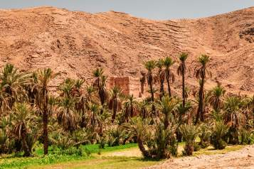 Morocco oasis palm trees