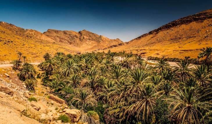 """A couple hours in, Mohamed says """"J'ai un surprise!"""" and pulls off the road, down a bumpy track and straight into a thick palm grove."""