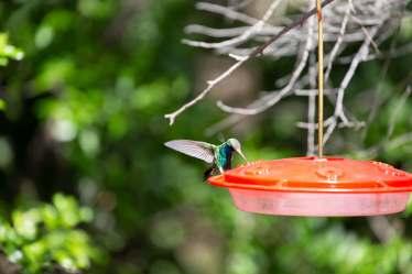 Paton Center for Hummingbirds bird feeder