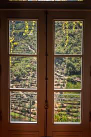 Quinta do Panascal vineyard view