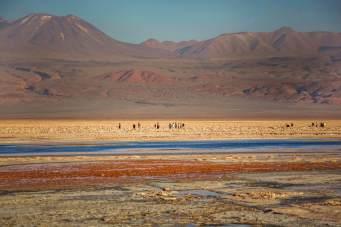 Walking in Salar de Atacama