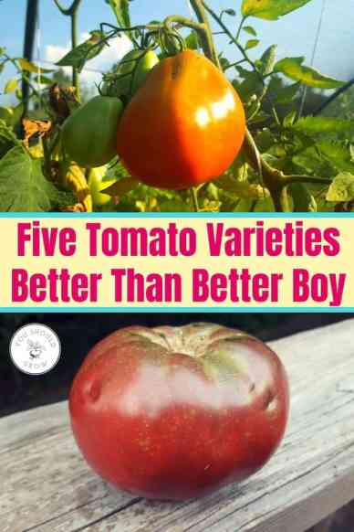 Five Tomato Varieties Better Than Better Boy Text overlaying images of coure di bue and cherokee purple tomatoes