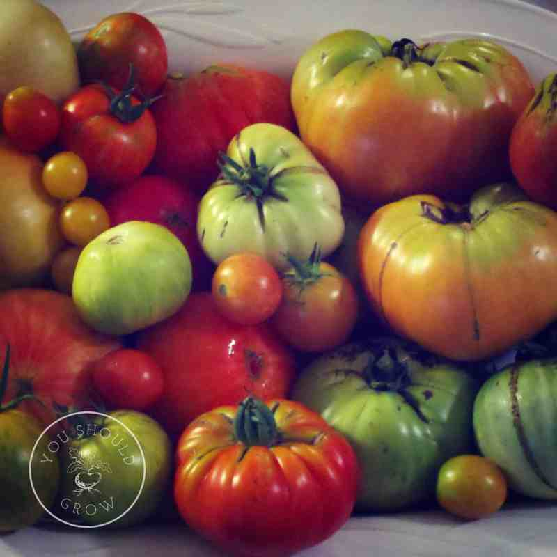 Home Grow Tomatoes
