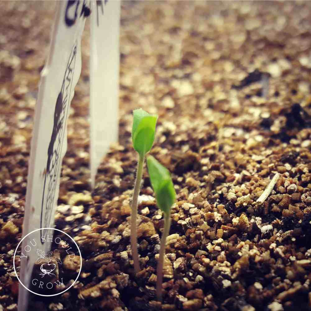 Seed Starting: You Can Do It!