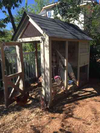 Super adorable chicken coop in Dr. Daniel's backyard.