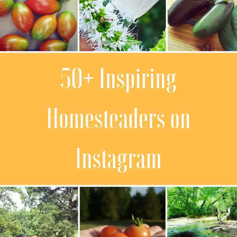 The Big List of Homesteaders To Follow On Instagram