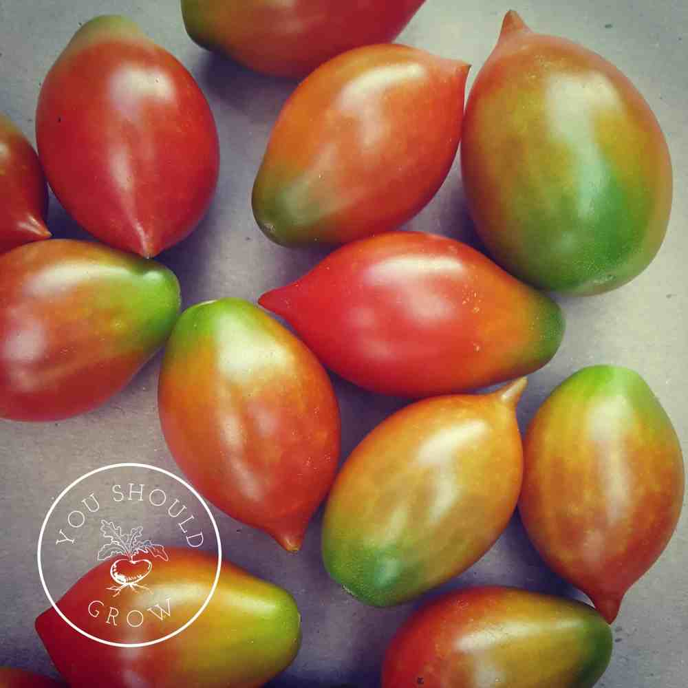 Heirlooms, Hybrids, and GMOs: What they are and why you should care.