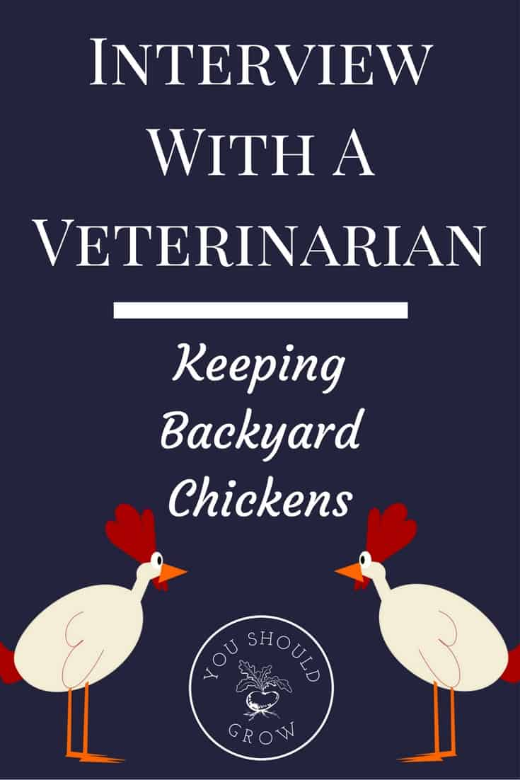interview with a veterinarian keeping backyard chickens you
