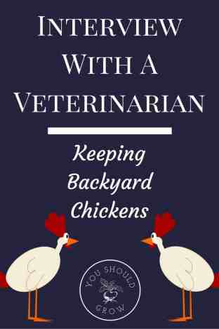 Tips For Keeping Chickens In Suburban Backyards A Veterinarian S
