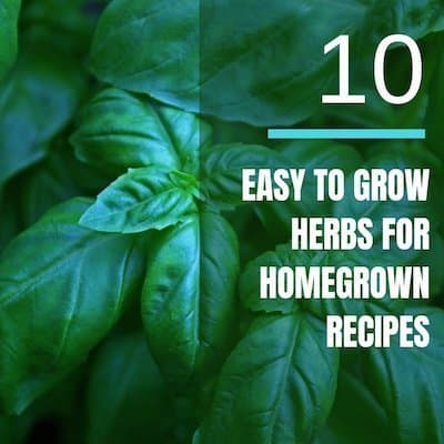 10 Easy To Grow Herbs For Homegrown Recipes