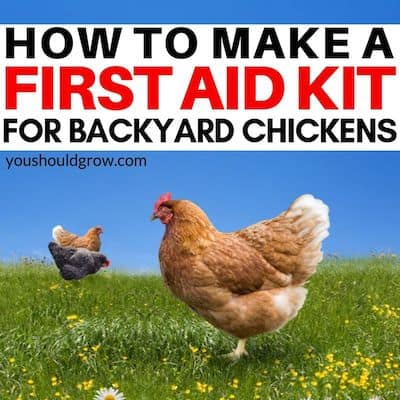 How to make a first aid kit for backyard chickens (featured image)