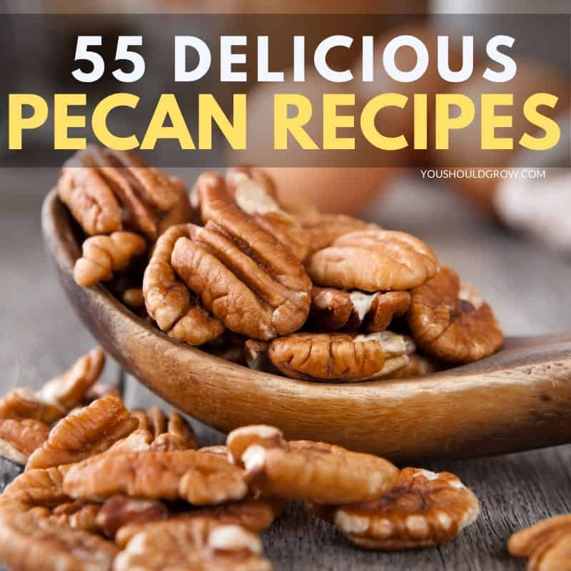 55 Sweet And Savory Pecan Recipes You Should Grow