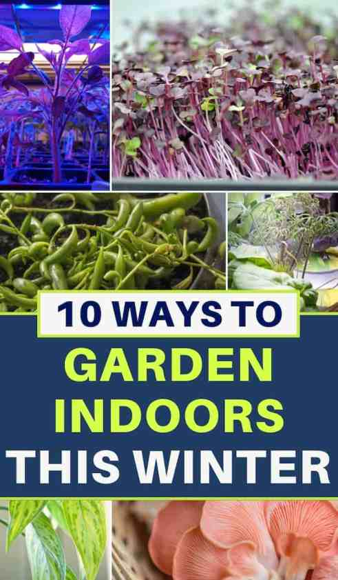 Indoor garden ideas - 10 ways to garden indoors this winter