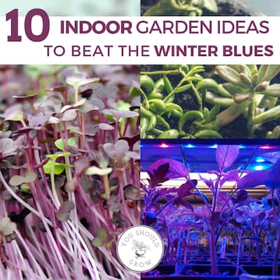 10 Indoor Garden Ideas To Beat The Winter Blues