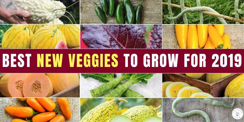 new vegetable varieties for 2019