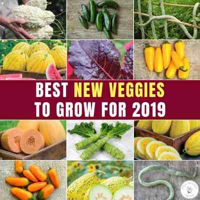 11 New Veggie Varieties For 2019 That Will Blow Your Mind