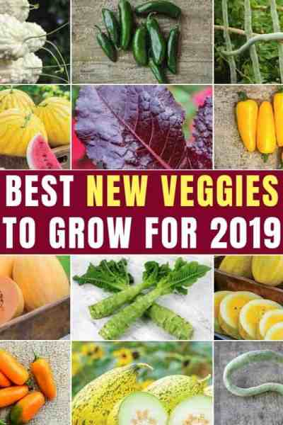 best New Veggies To Grow For 2019 feature