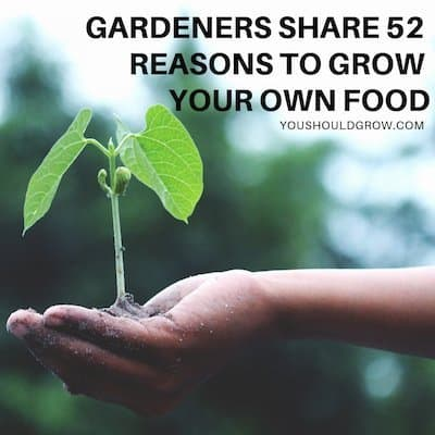 Gardeners share 52 reasons to grow your own food black text over image of hand holding small plant