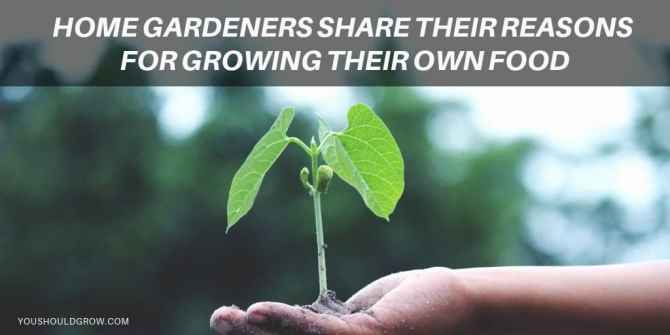 52 Reasons To Grow Your Own Food twitter